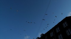 Sea gulls over Vesterbro
