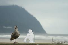 Sea Gull and Girl