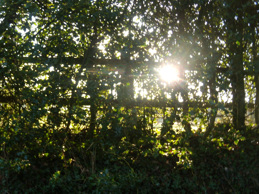 Sun through hedgerow Welwyn Circular
