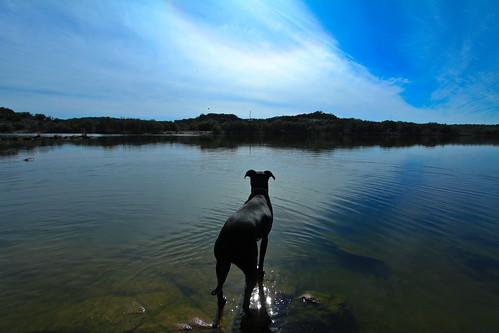 dogs nature burnettexas canon1022 inkslakestatepark