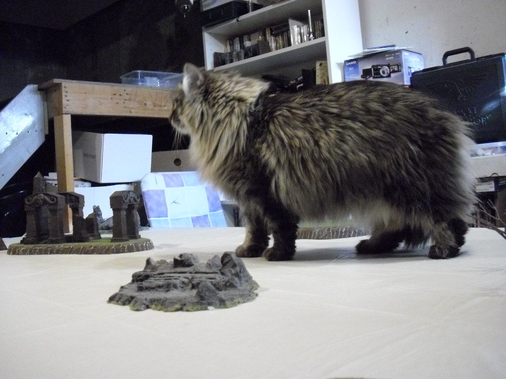 Danya up on the gaming table