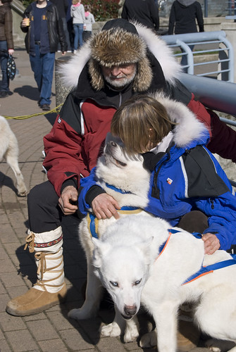 4381607574 f98b8d1289 Sled dogs in Yaletown