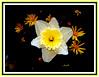 sistema floral