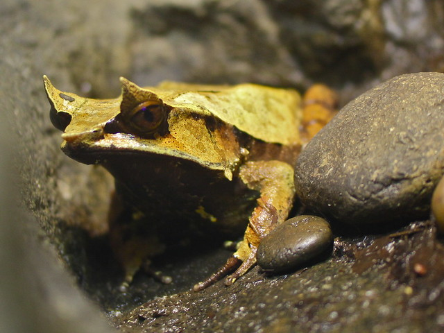 a study of the taxonomy of frogs Frog and butterfly life cycle assessment sol 24 requires students to answer at the analysis level of bloom's taxonomy the test will be scored.
