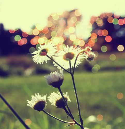 Armonía De Amor Armonia De Amor Cara Bonita Es Mi Inspi Flickr