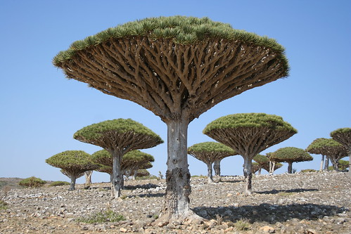 Strange hiking in Socotra.