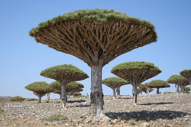 Archipiélago de Socotra, Yemen