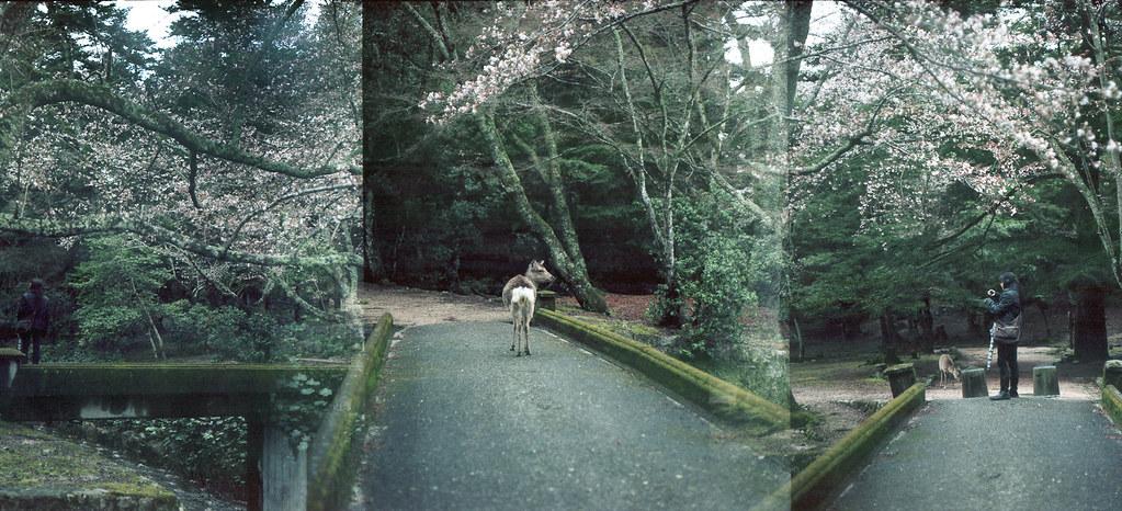 green world / Miyajima #3 by RieSu (mo)