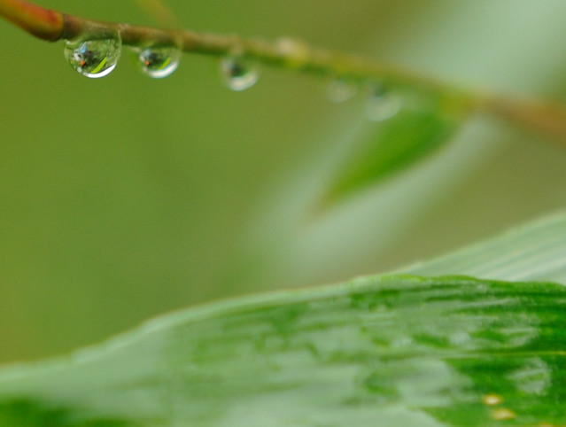 The remains of the spring rain