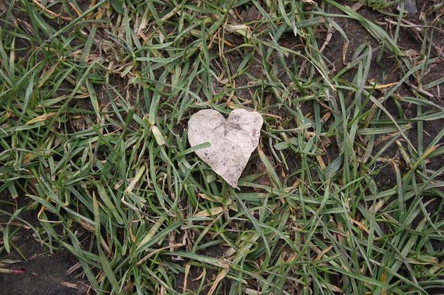 A little heart leaf