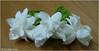 Gardenia ..