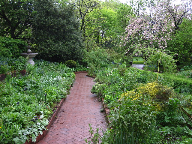 The Shakespeare Garden of BBG. Photo by Rebecca Bullene