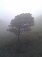 大帽山大霧山
