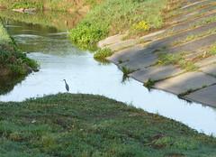 floodplain(0.0), fish pond(0.0), loch(0.0), lake(0.0), wetland(1.0), stream(1.0), reservoir(1.0), river(1.0), bank(1.0), creek(1.0), body of water(1.0), watercourse(1.0), reflection(1.0), canal(1.0), pond(1.0), waterway(1.0), marsh(1.0),