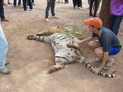 Fun with the tiger