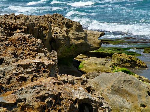 """Dog Head"" Blowing Rocks Nature Preserve, Jupiter Island, Florida"