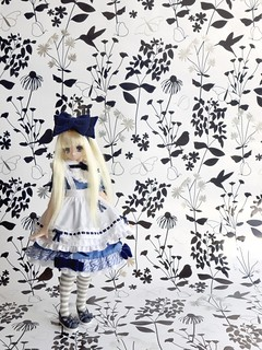 Week 22: Alice - Pure Neemo ex cute Koron (ADAW 22/52)