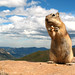 06-05-10: Chipmunk Near Trail Ridge Road by Ryan Grayson