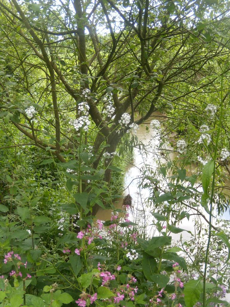 Waterside tableau Ashurst Circular