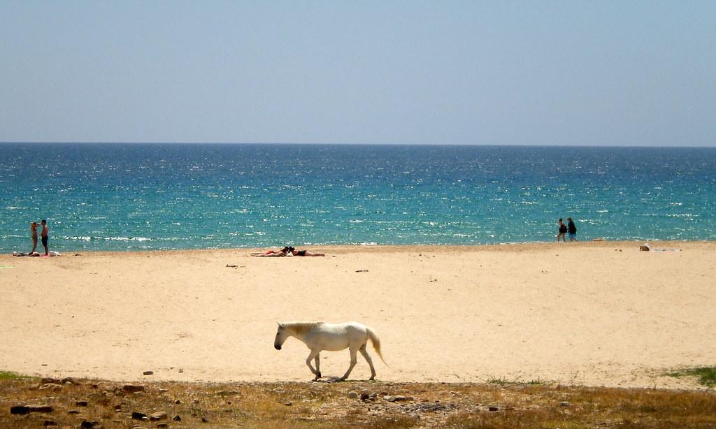пляж болония
