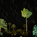 Stars Over Palm tree ,