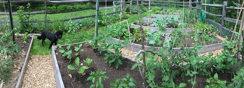 backyard garden panorama IMG_1384