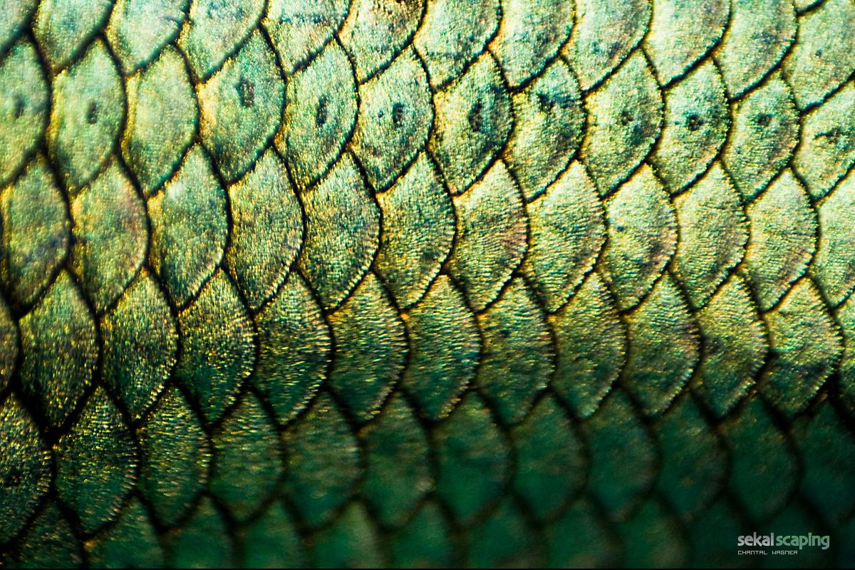 Fish scales the image kid has it for List of fish with fins and scales