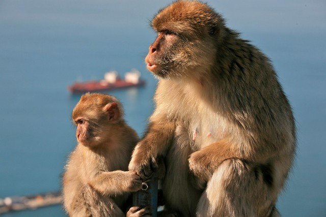 Monkey Call