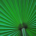 Green Sunrise Under the Umbrella of the Palm Frond by Madison Guy