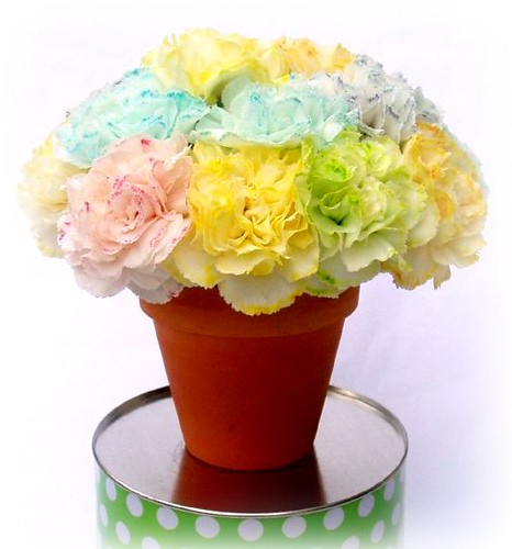 Rainbow Carnations project | Flickr - Photo Sharing!