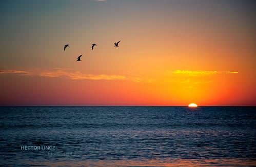 ocean sunset sky sun sol birds uruguay atardecer dawn nikon pajaros cielo piriapolis oceano nikond90
