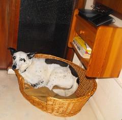 Purina Bella Small Dog Food Sampled