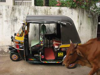 Kannur district, Kerala, India, Asia, North-Kerala, Indien, Asien