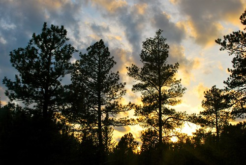 trees sunset sky nature clouds forest march nikon evergreens blackhillsnationalforest