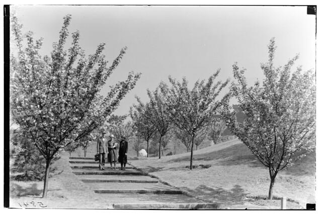 Cherry Walk 1926