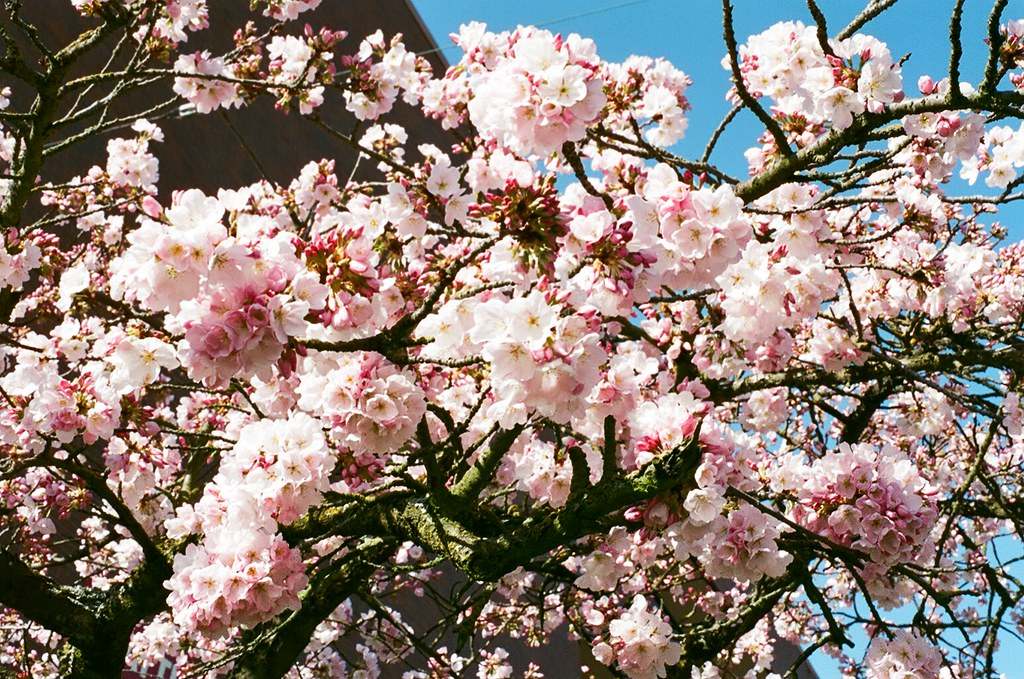 Please stay with me, the beauty of Spring.