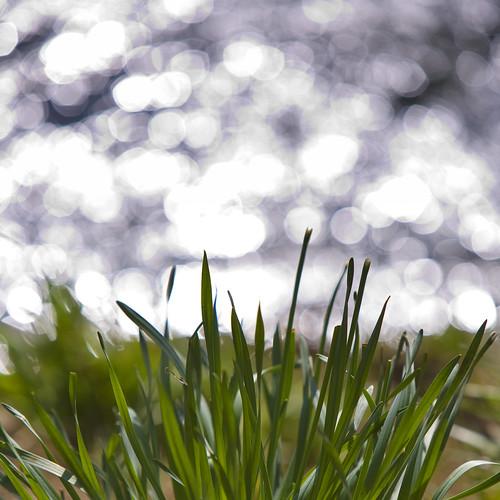 light green grass canon river square bokeh 5d