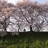 Photo:京都府八幡市 By sprklg