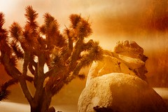 Rock Climbing ~ Joshua Tree