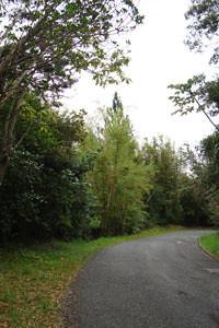 Bosque de Maricao