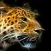 Panthera pardus by A.G. Photographe