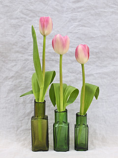 Three Pink Tulips in Green Bottles