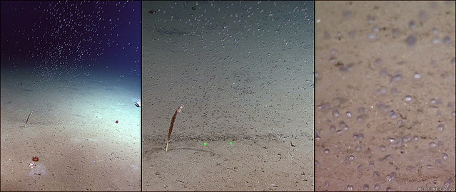 Distant, near and close-up views of methane bubbling up from the seafloor in Bubbly Gulch on Clayoquot Slope.