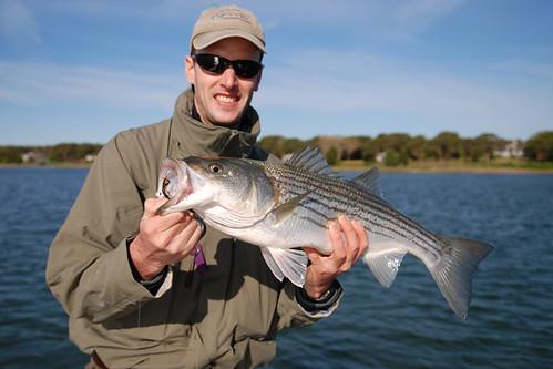 27 inch striped bass from Sengekontaket Pond