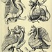 022-Animales en piedra-entrada norte de la catedral de Rouen-Gothic ornaments…1854- Augustus Pugin