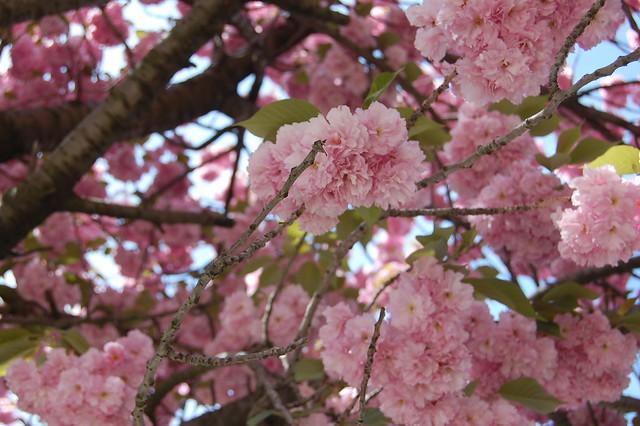 More Spring Blossoms