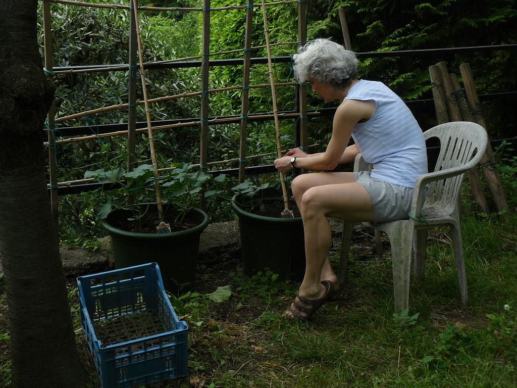 Speciale moda donna primavera estate piantare basilico for Seminare basilico