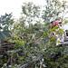 Hurricane Ike Recovery