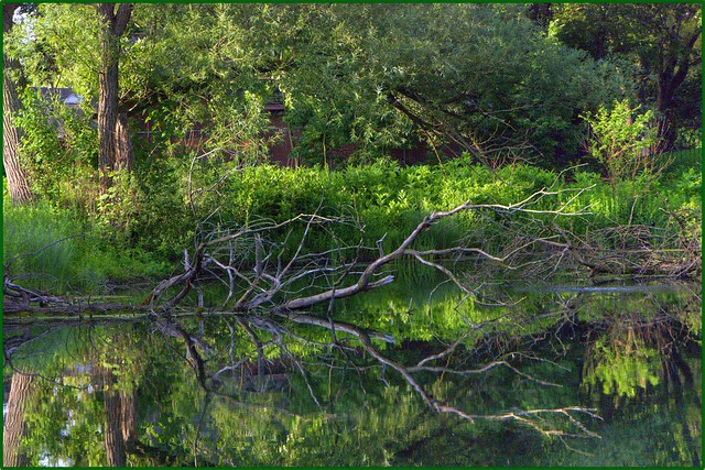 reflection of dead branches on pond 2-2 full with green border bp