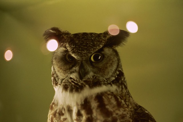 no one has ever seen the owl and lived to tell about it